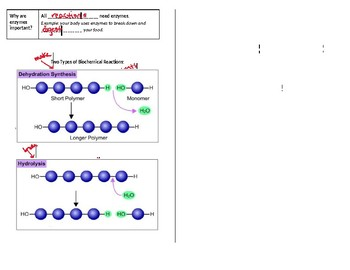 Enzyme Guided Notes (Fit for Interactive Notebook)