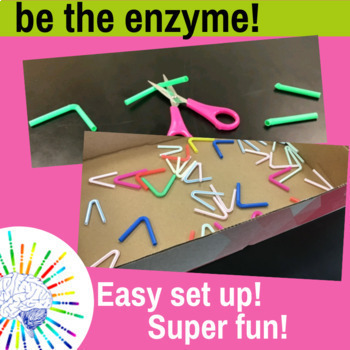 Strawase Enzyme Lab: Explore Reaction Rate Over Time with this Hands-On Activity