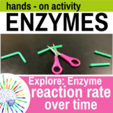 Enzyme Lab Activity: Explore Reaction Rate Over Time - Hands-On!