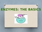 Enzyme Notes- The Basics