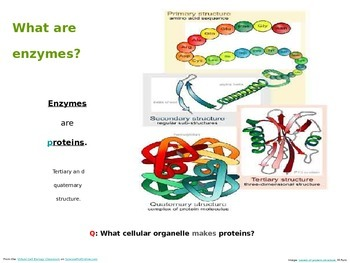 Enzyme PowerPoint Biology Lecture