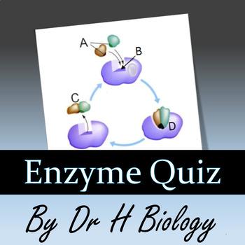 Enzyme Quiz