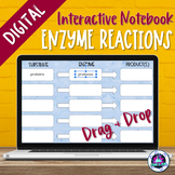 Enzyme Reactions Digital Activity | Distance Learning