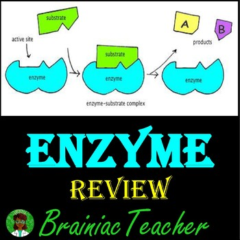 Enzyme Review PowerPoint