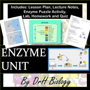 Enzymes - Biology Unit