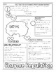 Enzyme and Enzyme Regulation Biology Doodle Diagram Notes