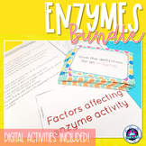 Enzymes Bundle (Biochemistry)