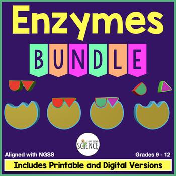 Enzymes Bundle