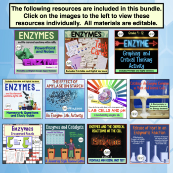 Enzymes Bundle