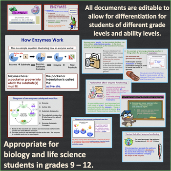 Enzymes PowerPoint