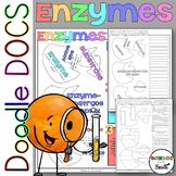 Enzymes Coloring Worksheets with 8 Differentiated Versions Included