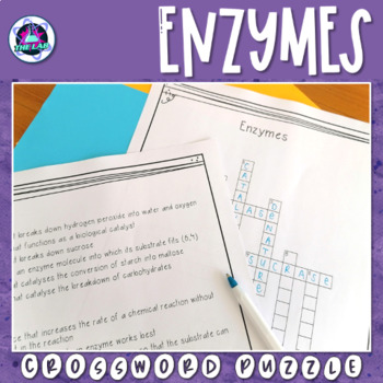 Enzymes Crossword Puzzle