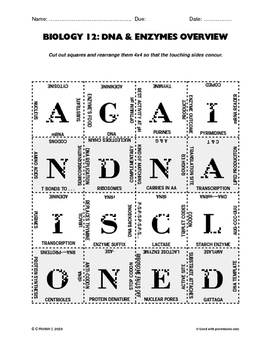 Enzymes & DNA Puzzle