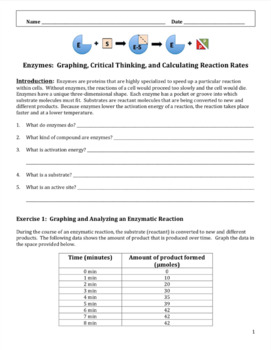 Enzymes Graphing And Critical Thinking Worksheet By Amy Brown Science