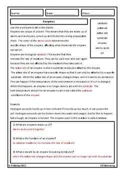Enzymes Homework Review Worksheet- Middle, High School Biology