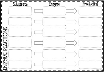 Enzymes Interactive Notebook