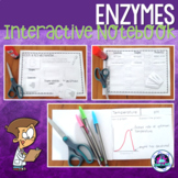 Enzymes Interactive Notebook (Biochemistry)