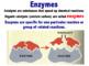 Enzymes & Metabolism (Editable)