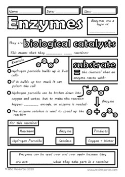 Enzymes Middle, High School Biology Doodle Notes