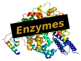Enzymes Power Point