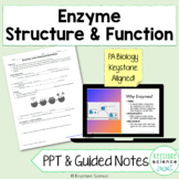 Enzymes PowerPoint and Guided Notes with KEY Biology Keyst