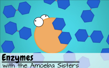 Enzymes Recap Answer Key by The Amoeba Sisters