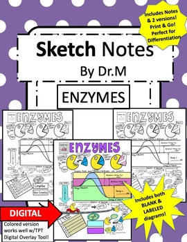 Enzymes Sketch Notes Doodle Notes W/Teacher's Guide and Student Notes!!