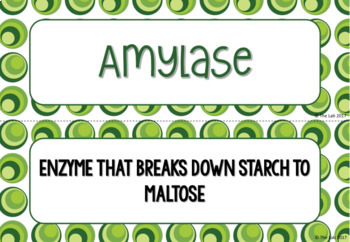 Enzymes Vocabulary Card Sort