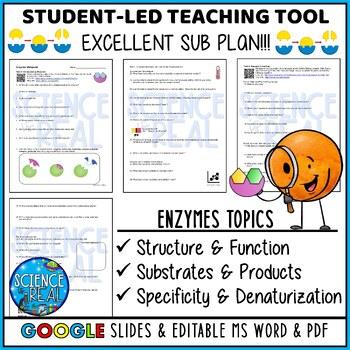 Enzymes WebQuest