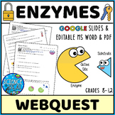 Enzymes Webquest - Distance Learning - Digital and Printable