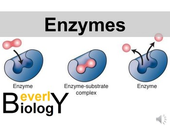 Enzymes and Catalysts PowerPoint (+ free student handout)
