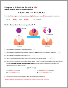 Enzymes and Substrates Practice