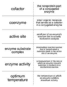 Enzymes and Vitamins Vocabulary Flash Cards for Biological Chemistry