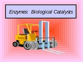 Enzymes as a Catalyst