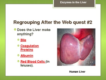 Enzymes in the Liver Lab Slides