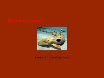 Epaulette Shark - Power Point Information Pictures History Facts
