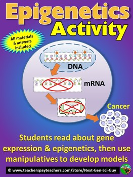 Epigenetics Activity: Read about and Create a Physical Model - NGSS