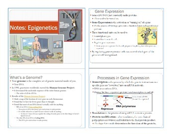 Biology Unit Bundle: Epigenetics