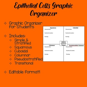 Epithelial Tissue Teaching Resources | Teachers Pay Teachers