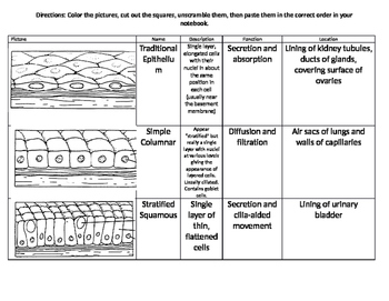 Epithelial Tissue Cut and Paste