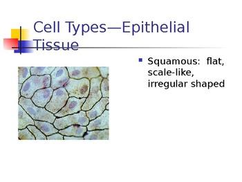 Epithelial Tissue Presentation