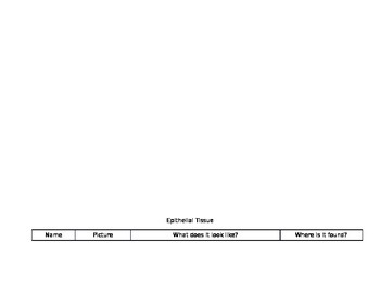 Epithelial Tissues Table Worksheet