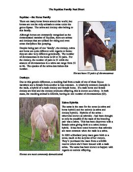 Equidae Fact Sheet