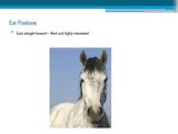 Equine Behavior Powerpoint