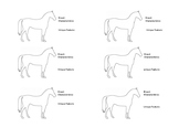Equine Horse Breed Notes