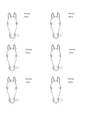 Equine Horse Leg and Facial Marking Notes