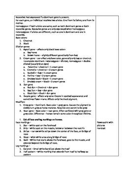 Equine Identifying Factors Lesson Plan
