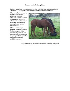 Equine Nannies for Young Stock