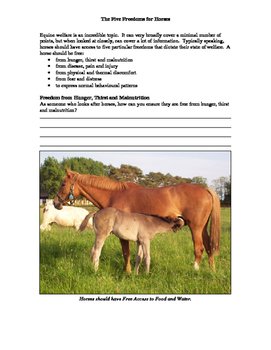 Equine Welfare: the Five Freedoms Activity