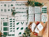 Essential Leaf Classification and Morphology Guide | Leaf Shape, Identification